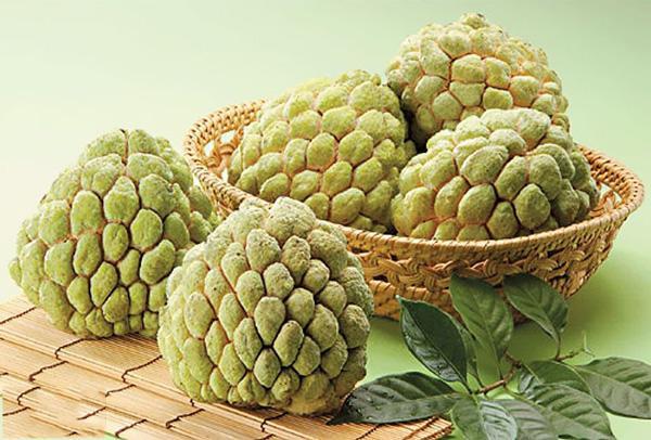 台湾特产名贵水果 释迦怎么吃