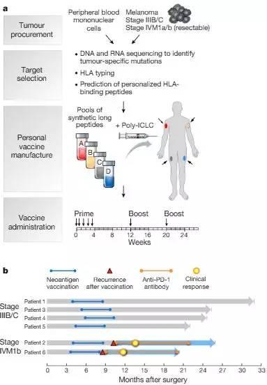 两篇Nature同时发表:首次!个性化癌症疫苗的抗癌效